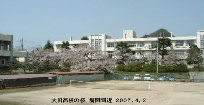 大田高校の桜