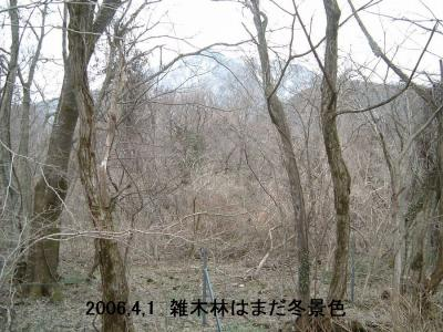 三瓶の雑木林